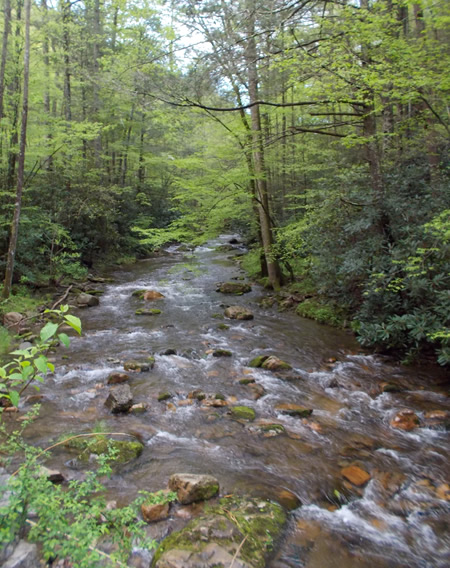 Cherokee National Forest, Tennessee.